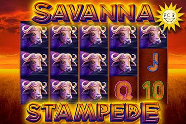 Savannah Stampede